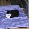 【動画あり】ペピイ ソフトクールマット 枕付き 我が家の猫氏の反応は?