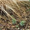春の移植作業は続く〜植物3年説