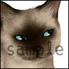 リアルなネコのLINEスタンプを作ろう・49 シャム猫のスタンプ