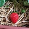 家庭菜園からプチ農業へ♪