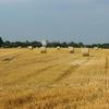 猛暑と農作物