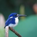 鳥の写真、ほか。