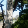 寺津高擶街道を行く 高擶城趾と寺津水運の歴史巡り