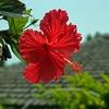 冬の沖縄旅行の宿を変更で、さらにぐんと安くなった旅費公開!