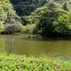 ミズキの谷の池(神奈川県横浜)