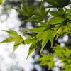 新緑の京都一周トレイル(東山)と琵琶湖疏水を巡る