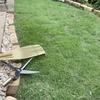 芝刈りしました。軽々と刈れる芝生鋏(しばふばさみ)で定期的なお手入れを。