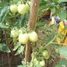 【もしもの備え、、それはもう、災害とかウィルスだけでなく、「時代そのもの」への備えだと思う。いや、もし前向きに考えることができるのなら、次にやってくる時代、ニューノーマルへの準備であるべきなのかもしれない、、】 (#農業支援 #国際協力NGO #海外ボランティア)