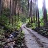 林道ウスイ谷線(千早赤阪村)を走る