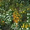 咲かない花を育てる