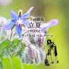 二十四節気 5月5日より立夏、サバトはベルテーン。魔法ハーブはボリジ