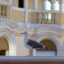 鳥がよむ俳句