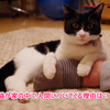 猫が家の中でついてくる理由と心理とは?
