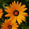 花壇の花の写真など