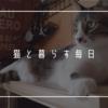 猫と暮らす日々