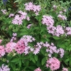 僕が最近撮ったお気に入りの花の写真5選!