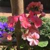 春分、おめでとう!みたいな。。(^ν^)