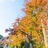 高尾山の秋のはじまり