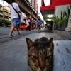 4月の遊び相手は、タイ猫・・・だけ! ひげ、ぴーん!