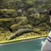 さいたま水族館に行ってきました