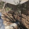 美味しいミョウガを収穫すべく10年以上経過してはじめて管理作業を行なった家庭菜園的活動家