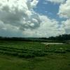 第12回 コッツウォルズの農園