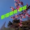 【新宿御苑】今年の寒桜を撮影してきた!