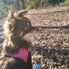 愛犬マナと久しぶりに公園でお散歩