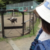 栗山公園 ― 動物たち ―