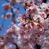 春真っ盛りの伊豆へ行ってきた。