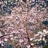 夜桜と週末の練習etc
