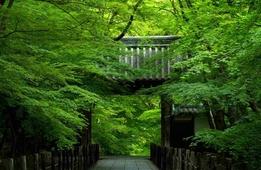爽やかな初夏の風を感じたい―京都の青もみじの名所