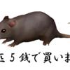 1月15日 ネズミ1匹5銭で買い取ります