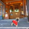 個人的にもう一度行きたい長野県ペットOKのカフェ5選💛