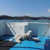 犬も乗れる真鶴半島遊覧船