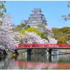 姫路城とブルーインパルス 千姫の悲哀と桜 🌸