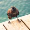 鳥「今日のささじぃ、クド過ぎー」