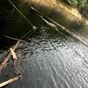 特に初心者に優しい!環境の良い湖は!(VOL.3)