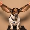 耳掃除はしなくていい?してはいけない?科学的に正しい耳掃除の方法はこれだけ!