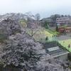 【京王よみうりランド】夜桜ジュエルミネーション アクセス、見どころ、春の混雑状況は?