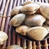 貝類トップの栄養素!?ダイエット・健康促進にはアサリを摂取しよう!!