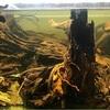 流木のアク抜きをしないと水槽崩壊に繋がる!?アク抜きをする理由と正しい方法