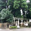 【加賀】栢野(かやの)の大杉は菅原神社にそびえる樹齢2300年の山中温泉随一のパワースポット