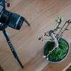 自宅で過ごす日々、盆栽さくらの開花を眺めたり写真を撮って心穏やかに……