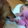 イヌたちと娘
