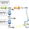 C型肝炎ウイルスと直接作用型抗ウイルス薬の作用機序