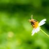 【地球温暖化×コーヒー×ミツバチ】30年後も美味しいコーヒーが飲みたい!!もっと、ミツバチの力を