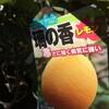 黄色い果実