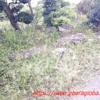 野分の後と浅茅生の庭と・台風15号の爪痕