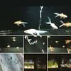 Acquario di Sumida2v(゚∀゚v(゚∀゚v(゚∀゚)v゚∀゚)v゚∀゚)v